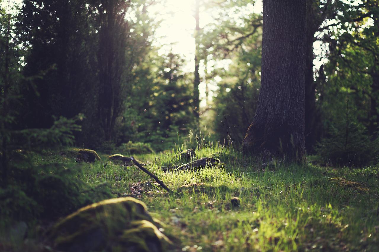 Green - Forestazione e bonifica montana;Al via il programma strategico regionale 2